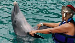 dolphin punke