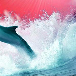 Wave racer disp